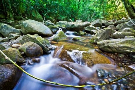 Stream flowing through rocks in a lush green rainforest in Australia