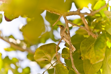 nature picture: Sunny nature picture with a wild little bird perched on the branch of a tree in summer, low angle