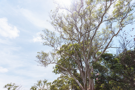 which one: a look-up shot of a group of trees which one of them has a flock of birds on it Stock Photo