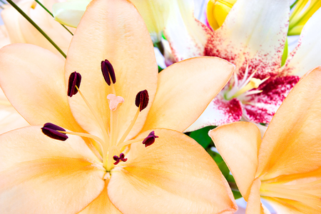 stigma: Close up image, including a bunch of lily flowers, focusing the yellow color flower that shows the stigma and anthers clearly. The background filled with blurred flowers