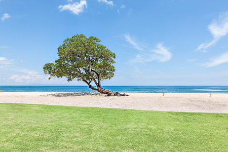 grass area: Green grass area at the beach side with a tree near the sand under blue sky, horizon from the distance Stock Photo