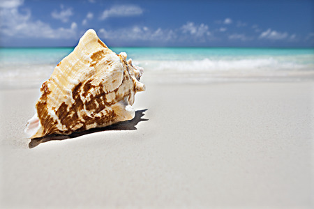 Seashell on the sand close up near the ocean with blurred blue sky background, this conch has focused on the patterns in the surface  with yellow color Stock Photo