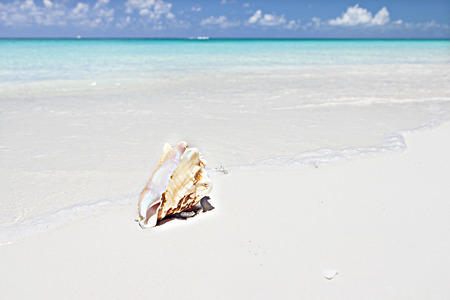 shell isolated on the blue water, sea coast, the ground with the sand and clear water with foam, the blurred sky with clouds and blue color over the horizon Stock Photo