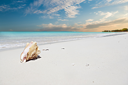 Conch shell on the sand at sea coast near the blue ocean water with foam, the horizon and the sky looks yellow and blue with clouds like a sunset or sundown