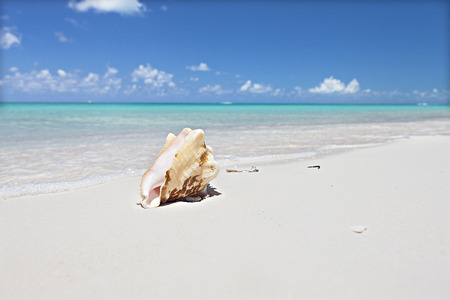 Sea shell isolated on the sand at the sea coast near the clear water waves with foam under blue sky with white clouds, the conch is yellow color and pink from the inside
