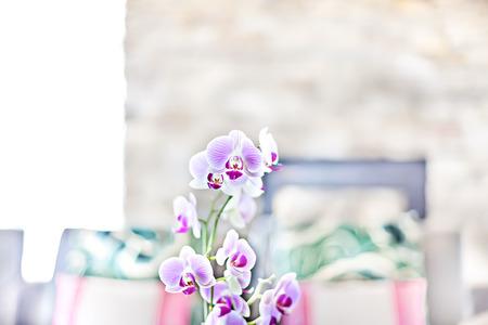 Lila Orchideenblüte nah oben im verschwommenen Kissenhintergrund im modernen Hausküchenbereich mit Kamin Standard-Bild