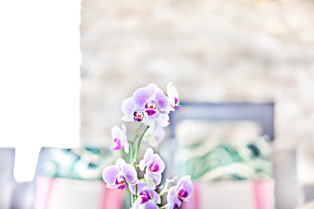 Purple orchid flower close up in the blurred pillow background in the modern house kitchen area with a fireplace Imagens
