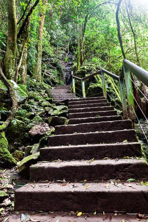 Scale di pietra con foglie su di esso lungo fino alla montagna attraverso la giungla con alberi e pietre muschiose Archivio Fotografico