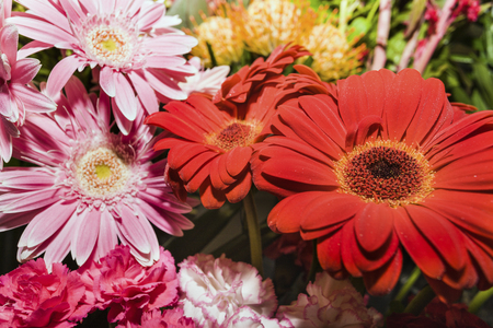Red and pink gerbera and little carnations in a same bunch of flowers in a gift shop