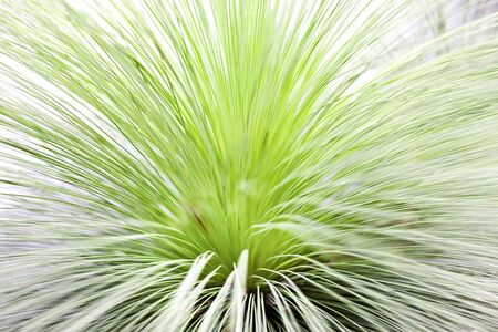 Grass close up with thin leaves showing the inside dark area where the lines came from of a fancy plant