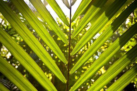 A macro shot of a palm tree leaf Stock fotó