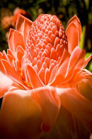 A macro shot of an Australian flower