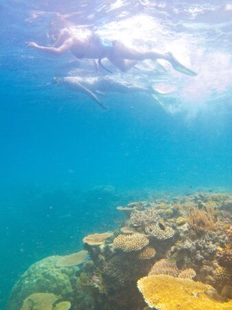People swimming in the sea just above the coral reef 写真素材