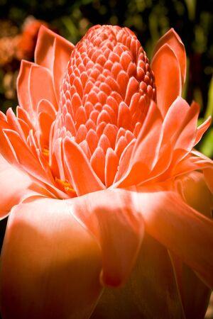 A photograph of an Australian flower Reklamní fotografie