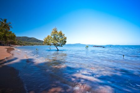 An awe-inspiring seascape with trees in the sea and mountains in the background