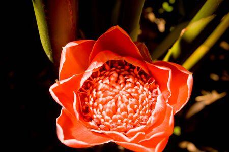 An Australian flower close-up shot