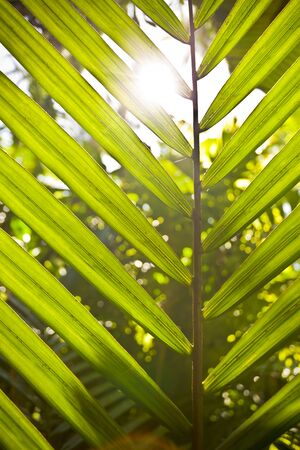 A palm tree leaf with the sun shining through it Reklamní fotografie