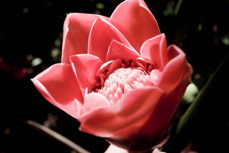 A pretty Australian flower
