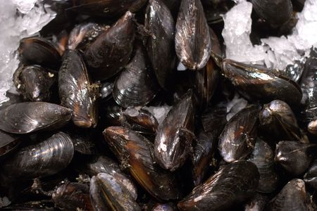 Mussels on display in Seattles seafood market. Stock Photo