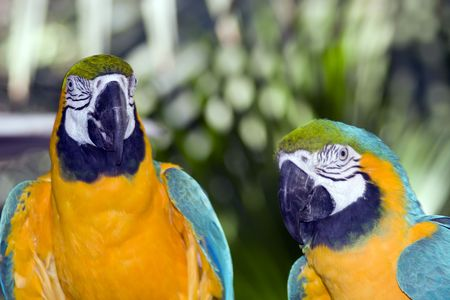 Closeup shot of parrots in a zoo. photo