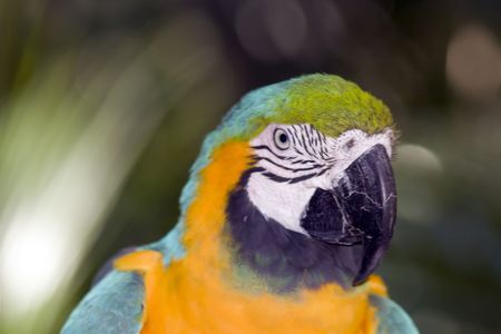 Closeup shot of a parrot in a zoo.