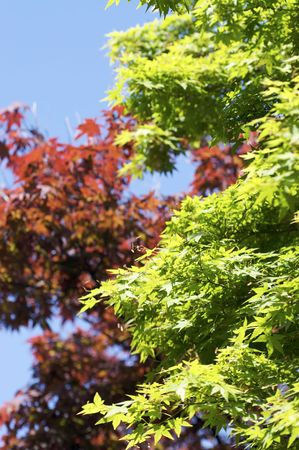 Bright, high contrast shot of red and green leaves during a sunny day.
