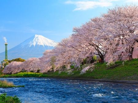 春・桜と富士 写真素材