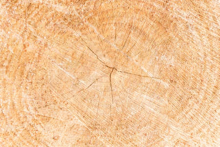 Tree trunk texture. Wickerwork background with rings Stok Fotoğraf