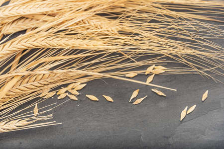 Cluster of dried wheat on a slate stone background. Stockfoto