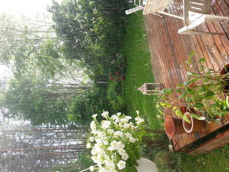 lloviendo: Beautiful weather event. Heavy raining in the garden and sunshine at the same time
