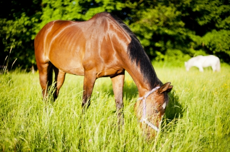Group of horses on a meadow in Europe  Beautiful animals photographed in warm sunlight surrounded by fresh green plants  Photograph has warm tone and rich colors Stock Photo - 13608060