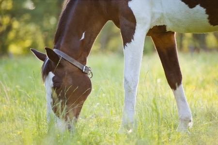 Horse surrounded by grasslands in Poland Stock Photo - 13608064