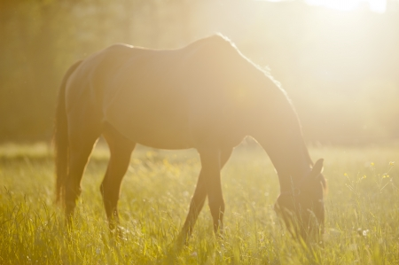 Horse surrounded by grasslands in Poland Stock Photo - 13608048