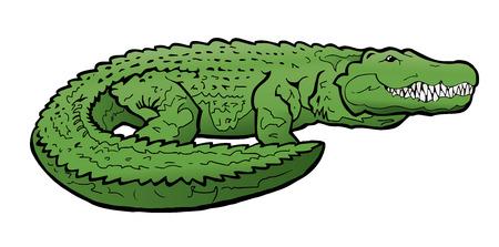 Alligator Illustration Illustration