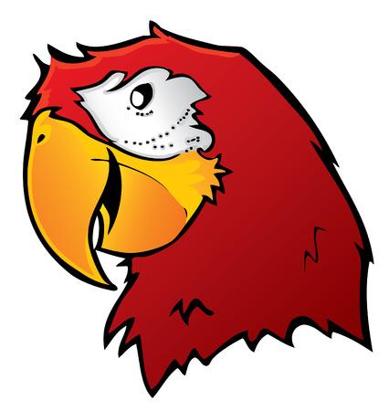 Parrot Illustration Vector