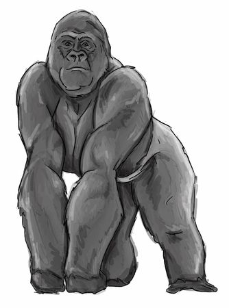 Silverback Gorilla Illustration Stock Photo