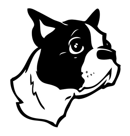 terriers: Boston Terrier Illustration
