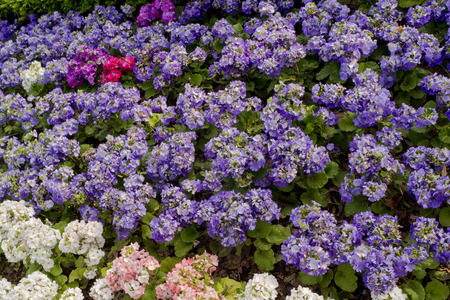 Beautiful and neat garden with flowers of multiple colors.