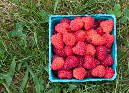 Pint of Raspberries