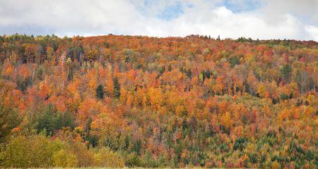 Vermont Fall Foliage Фото со стока