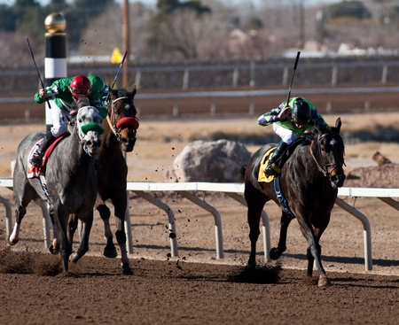SUNLAND PARK, NM – JANUARY 29:  Thoroughbreds at the poll in the 7th race during the Claiming Series on January 29, 2012 in Sunland Park, New Mexico. Stock Photo - 12143253
