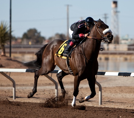 SUNLAND PARK, NM – JANUARY 29: Happy Rumor ridden by Rodriguez speeds down the track towards the 6th race win during the Claiming Series on January 29, 2012 in Sunland Park, New Mexico. Stock Photo - 12143252