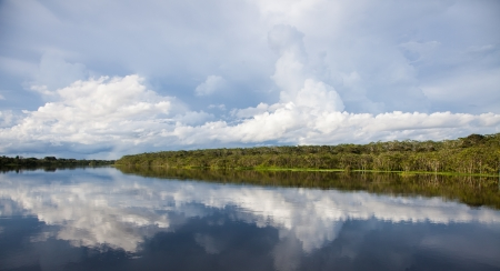 Amazon River Reflections