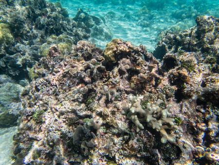 Underwater coral, fish, sand and sea Фото со стока