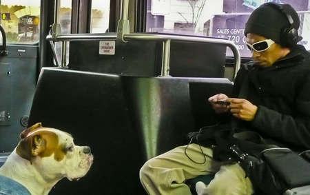 少年と彼の犬。