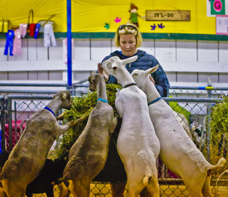 fairs: The Goat Lady. Editorial