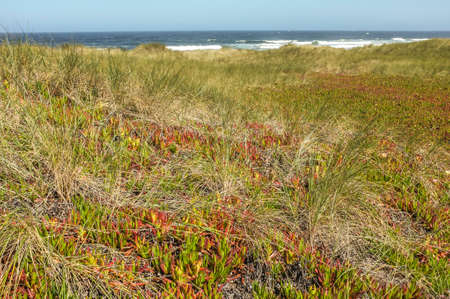 drakes: Point Reyes National Seashore,CA,Drakes Beach