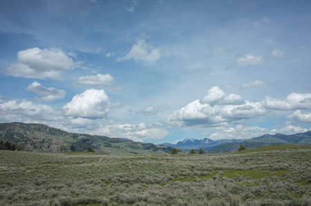 yellowstone: yellowstone high meadow