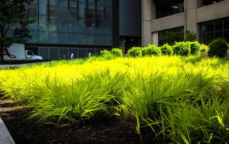 vegatation: vivid green grass in an urban setting Editorial