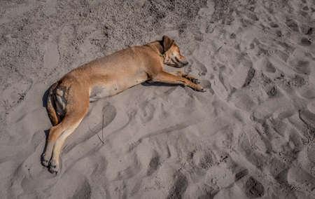 San Blas, Mexico beach dog.